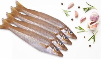 Lady Fish -Large / Kaane / Kilangan / Silver Whiting