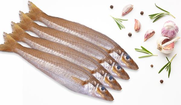 Lady Fish -Medium / Kaane / Kilangan / Silver Whiting