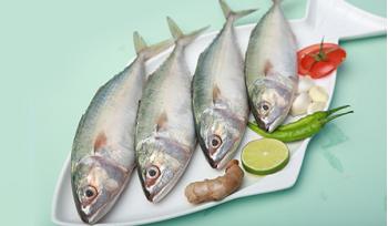 Mackerel (Large) / Ayala / Bangda / كبيرة الحجم