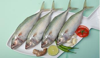 Mackerel (UAE-Local) / Ayila / Bangda / كبيرة الحجم