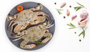 Fresh Crab (Medium Size 200gr+) / Nandu / Jenji / سلطعون أزرق- سرطان أزرق