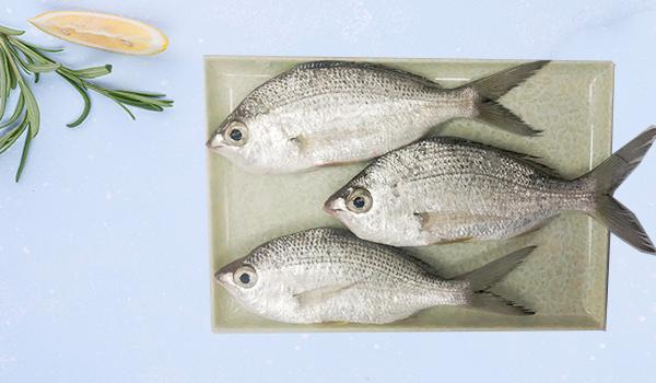 Silver Biddy / Badah Fish / Ademeen