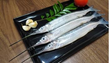 Gar Fish / Pipe Fish / Kolaan / Konti / الخرمان سمك