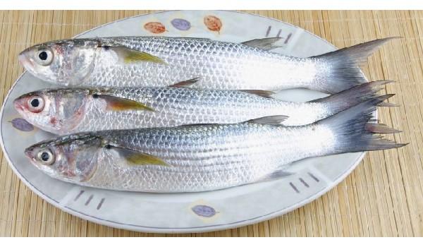 Mullet Fish (small) / Biya / Maalan